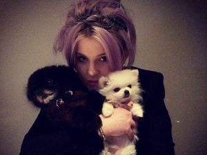 Ini Anjing Peliharaan Kelly Osbourne Seharga Rp 145 Juta