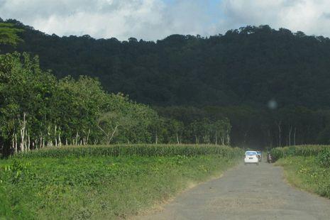 Kecantikan Alam Berbalut Mistis di Alas Purwo, Banyuwangi