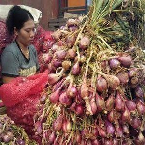 RI Setop Impor Benih Bawang Merah Tahun Depan