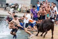 Festival Ekstrem di Spanyol, Terjun ke Laut Bareng Banteng