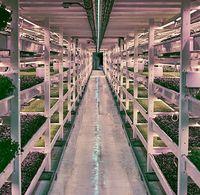 Growing Underground, Lahan Pertanian Pertama di Bawah Tanah