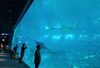 Menjelajah Dunia Bawah Laut di S.E.A Aquarium Singapura