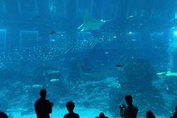 Tenggelam di Dunia Bawah Laut S.E.A Aquarium Singapura