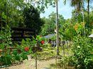 Anggrek & Burung Endemik Papua Ada di Taman Ini