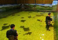 Berenang Bareng Hiu & Ikan Pari di Australia, Berani?