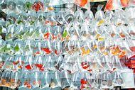 Mong Kok Goldfish Market, Pasar Ikan Pembawa Hoki di Hong Kong
