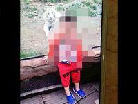 Tragis! Tangan Turis Cilik Putus Digigit Harimau di Tiongkok