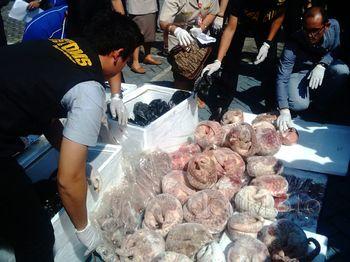 Bea Cukai Gagalkan Penyelundupan 1.390 Kg Daging Trenggiling