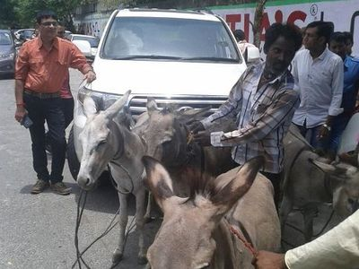Sebagai Bentuk Protes, Kawanan Keledai Disuruh Tarik Land Cruiser