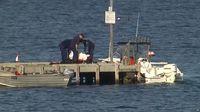 Tragis! Disaksikan Anaknya, Diver Ini Diserang Hiu & Tewas