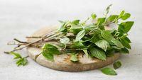 Daun Basil dan Daun Mint Termasuk 6 Daun Herbal Populer