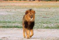 Duh, Turis Diduga Bunuh Singa di Taman Nasional Zimbabwe