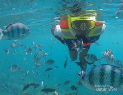 Menyelami Indahnya Kepulauan Karimunjawa