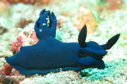 Siput Laut Warna-Warni & Aneka Biota Laut Cantik di Padang Bai