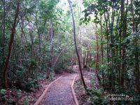 Lebih Dekat Dengan Alam di Hutan Pelawan, Bangka
