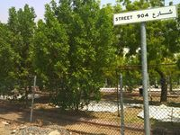 Pohon Sukarno Hijaukan Arafah