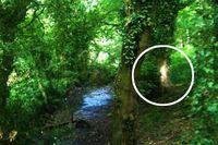 Hantu atau Cahaya? Foto di Hutan Wisata Jadi Berita di Inggris