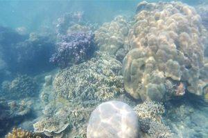 Dunia Bawah Laut Kepulauan Seribu,  Cakep !