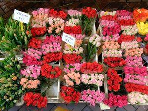 Cantiknya Pasar Bunga di Tengah Kota Utrecht, Belanda