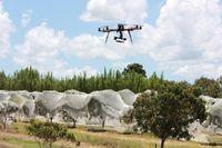 Petani di Queensland Kembangkan Drone Untuk Membasmi Hama