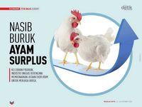 Nasib Buruk Ayam Surplus