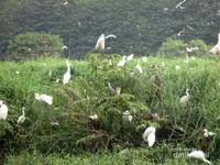Melihat Kerajaan Burung di Deli Serdang