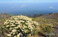 Mari Mendaki Gunung Tambora