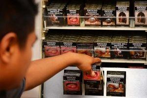 Oposisi Australia Usulkan Harga Rokok Rp 400 Ribu per Bungkus