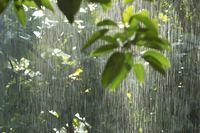 Tempat Paling Sering Turun Hujan di Bumi