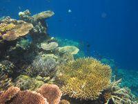 Catat! Kecantikan Bali Tidak Cuma di Bagian Selatan
