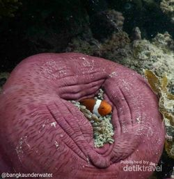 Menyelami Indahnya Bawah Laut Pulau Bangka