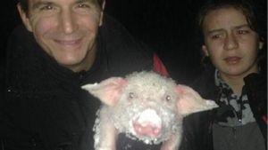 Aksi Penyelamatan Anak Babi dari Badai Salju Menuai Pujian