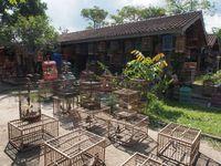 Menikmati Merdunya Kicauan di Pasar Burung Yogya