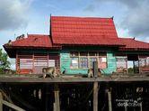 Pulau di Banjarmasin Ini Penuh dengan Monyet!