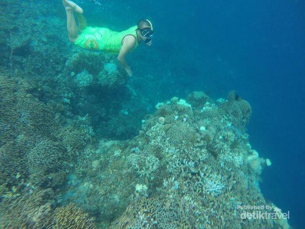 Lebaran Di Kendari, Sekalian Snorkeling Di Pulau Hari