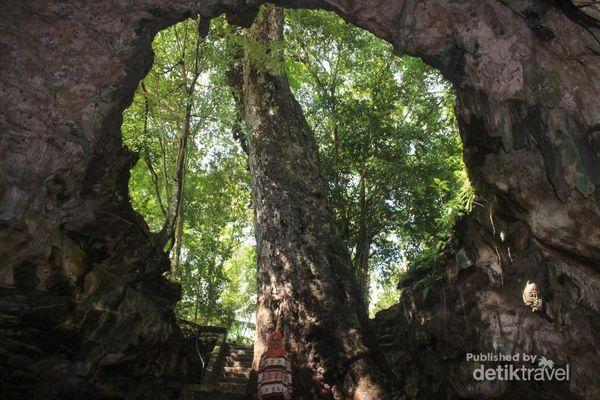 Penampakan Pohon Besar Di Dalam Gua Gunungkidul