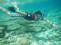 Pulau yang Asyik Buat Snorkeling di Raja Ampat