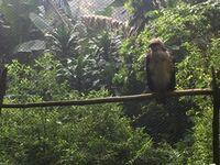 Mudik ke Jawa Barat, Bisa Mampir ke Penangkaran Elang