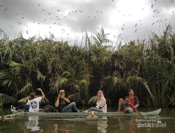 Menelusuri Habitat Rumah Bangau Di Padang