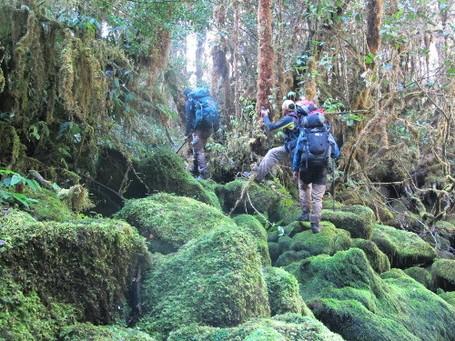 Menjelajahi Hutan Perawan Papua, Ini 5 Tipsnya!