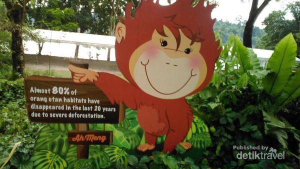 Jalan-jalan Ke Kebun Binatang Singapura, Seru Juga!