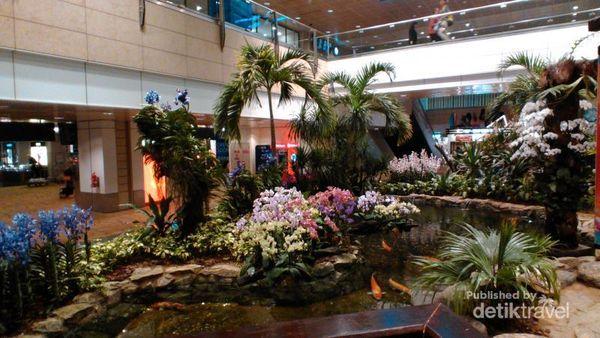 Transit Di Bandara Changi, Bisa Lihat Taman Anggrek Cantik