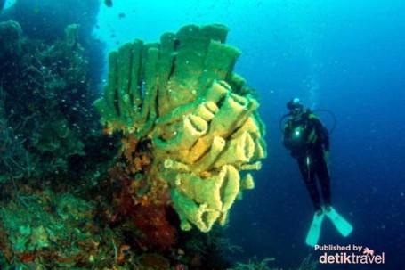 Pesona Alam Bawah Laut Morotai, Cantiknya Tiada Dua!