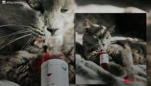 Wah! Di Amerika Ada Wine Khusus Kucing