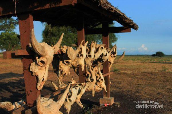 Akhir Pekan Seru Di Africa Van Java, Situbondo