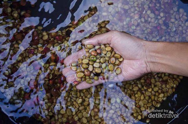 Liburan Ke Kulonprogo, Wajib Coba Kopi Lokal Yang Satu Ini
