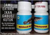 Jual Jamu Extrax Ikan Gabus / Kutuk