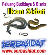 2eebad4327917650