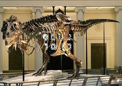 Museum Dinosaurus - infolabel.blogspot.com