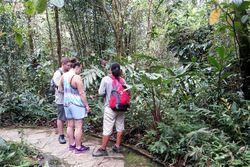Kinabalu Park, Penampakan Taman Nasional Ala Malaysia